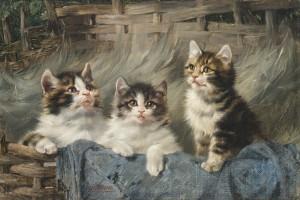 Drei junge Katzen im Korb Image
