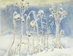 Sonnenblumen im Winter (Croissant-Garten an der ehemaligen Kiesgrube in Breitbrunn) ⋅ 1968 Image