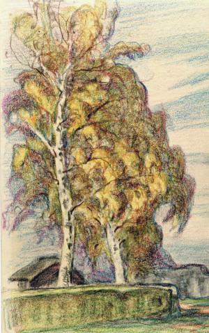 Birken hinter einer Hecke Image