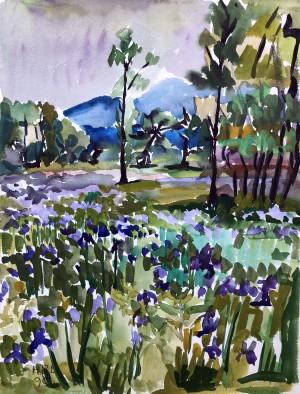 Iriswiese in der Hirschauer Bucht ⋅ 1990 Image