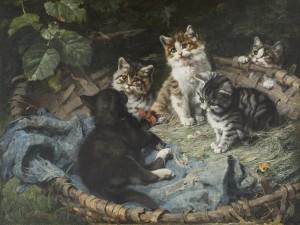 Katzen in Korb Image