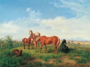 Pferde auf der Weide Image
