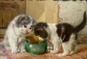 Zwei Kätzchen am Milchtopf Image