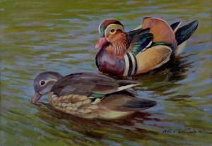 Enten im Wasser ⋅ um 1940 Image