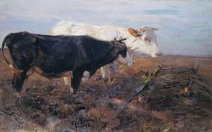 Ruhende Kühe Image