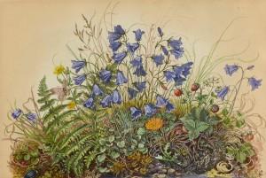 Wiesengrund mit Bergglockenblumen ⋅ 1942 Image